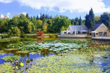 צמחים מתחפשים: פורים בגן הבוטני בירושלים