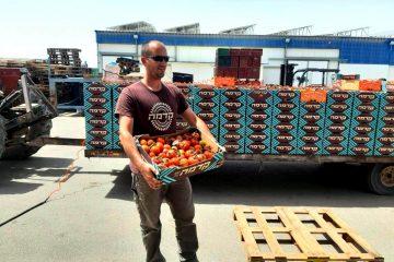 החקלאים תורמים כל יום: 15 טון ירקות