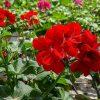 הטיפים שיעזרו לכם להצליח עם הגינה הביתית