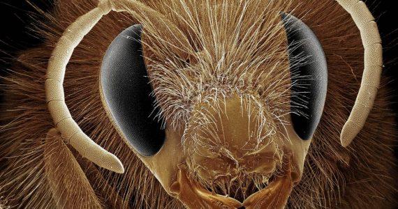 קרב בין עכביש 'קופצן' לדבורה ● הקטנטנים שלא רציתם להכיר