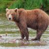 צפו: דוב הסתובב בדירת מגורים באמצע הלילה
