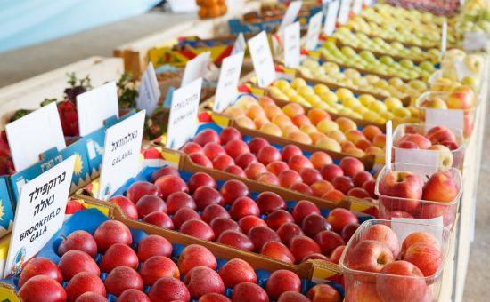 זני תפוחים חדשים במופ צפון