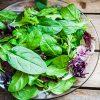 חשיבות העלים הירוקים בתזונה ועצות לשילובם בתפריט היומי שלכם