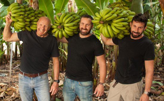 יאיר, ברק וישראל אבני מגדלי בננות, מושב גבע כרמל   צילום: מעין עופר