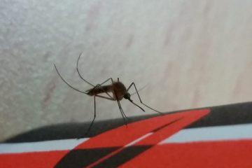 זהירות: יתושים שנגועים ב'קדחת הנילוס'