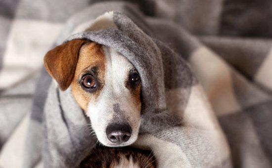 טוב מאוד חורף קר? כך נמנע צער בעלי חיים בחורף - כל הזמן XH-15