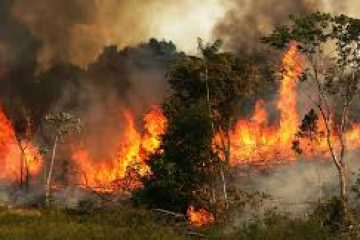 גודל האסון: האמזונס – היער השרוף