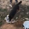 """צפו: הכלבה 'לולה' חשפה סמים בשווי מיליון ש""""ח"""