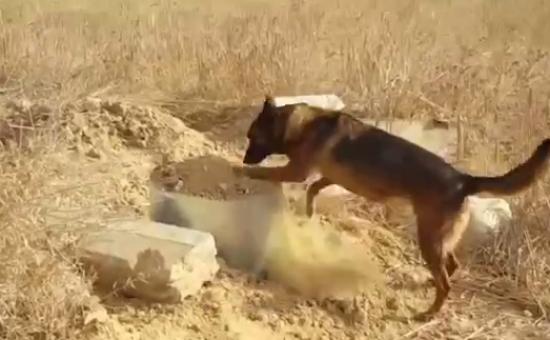 הכלב מסייע לחשוף רימונים