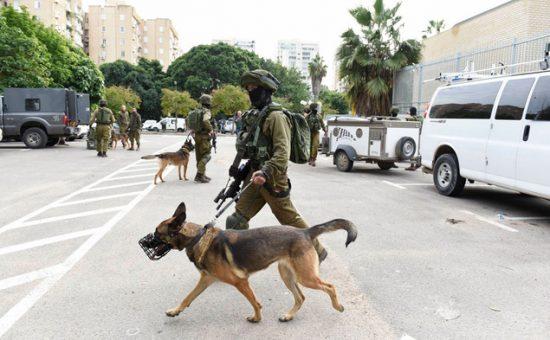 מצוד אחר מחבל. בתמונה: סריקות בתל אביב השבוע