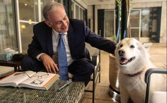 נתניהו והכלבה קאיה. צילום: פייסבוק