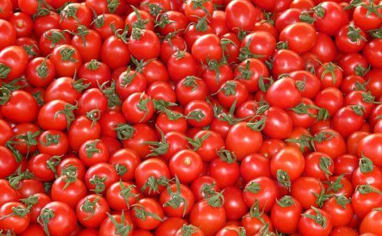 עגבניות