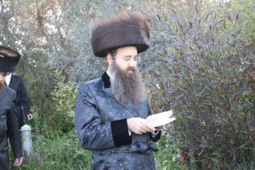 מלכות: חג המצות בסאדיגורה ירושלים