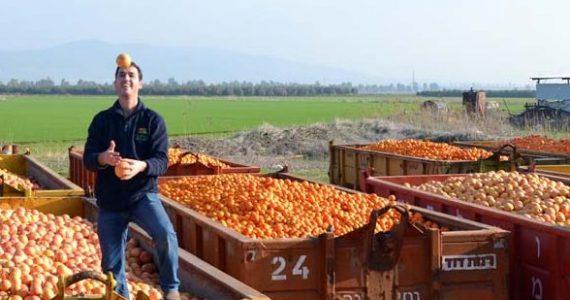 פריניב משיקה: מיץ מתפוזי ולנסיה – המתוק בארץ