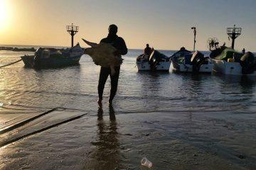 הפסולת פגעה בצב הים – הוא ניצל