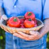 קיץ: תזונה, הגנה מפני השמש ומה שביניהם