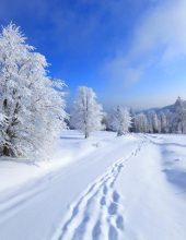 היערכות ומתח: האם שלג יעטוף את העיר?