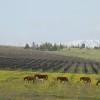 ארץ היין: היכן מגדלים את הזנים הטובים ביותר ליין?