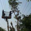 נערכים לחורף בחברת החשמל: עבודות מתבצעות בכל רחבי הארץ