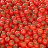 בשל העלייה במחיר: ייבוא עגבניות מטורקיה פטור ממכס