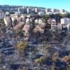 הירוק הפך שחור: צפו בתיעוד הנזק בחיפה