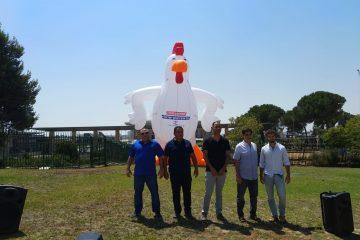 התרנגולת הגדולה בעולם הגיעה לכנסת
