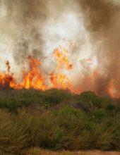 211 שריפות בשטחים פתוחים התרחשו אמש