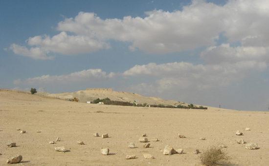 תל ערד, כאן אמורה להיבנות העיר החרדית החדשה כסיף(צילום: איתמר בן-דוד, החברה להגנת הטבע)