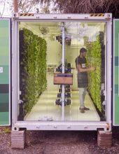 חדש: חסות ועשבי תיבול ללא חשש מחרקים