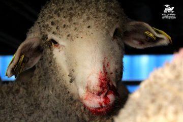 צער בעלי חיים הגיע לכנסת – ליצמן מתנגד