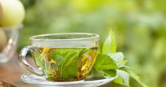לבריאות: האם צמח הנענע באמת מועיל לגופינו?