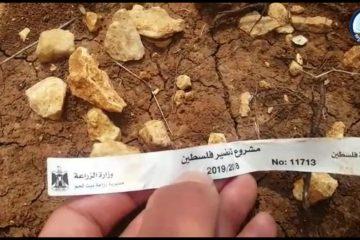 פלסטין הירוקה – כך נכבשות אדמות המדינה