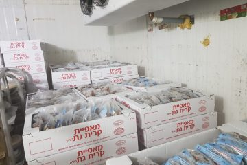 מבורות מים לגביניות מפנקות: בדרכו של נקדימון בן-גוריון