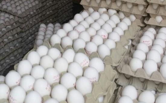 תפיסת ביצים מזויפות (צילום: דוברות המשטרה)