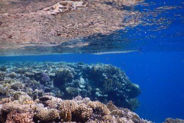 כוח משימה ישראלי-סעודי-ירדני להצלת ים סוף