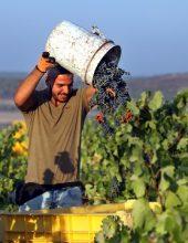 """היין הישראלי כבש את ארה""""ב"""