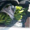 חסר מזל: נעצר על עבירת תנועה ונתפס גונב בננות