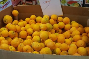 """עשרות ק""""ג פירות וירקות • תושב אשקלון נעצר בחשד לסחר בפירות וירקות גנובים"""