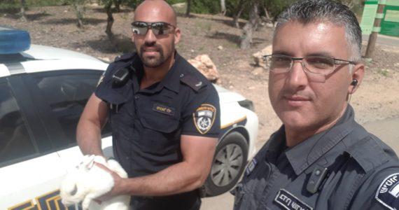 """""""למען בעלי החיים"""": השוטרים חילצו את הארנב"""