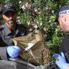כסף סמים ונשקים – המשטרה פשטה על הפשע בנתניה