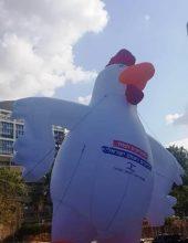 ה'תרנגול' הגיע גם ל'קריה' בתל אביב