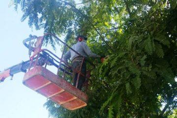 הר המנוחות: טופלו העצים שהפריעו לכהנים