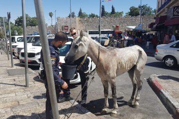השוטרים עצרו את המתעללים ושיחררו את הסוס