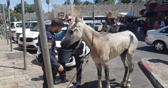הפעילה התלוננה: סוס ועגלה זו 'התעללות'