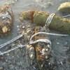 כנרת: נמצאו פגזים ממלחמת העולם הראשונה