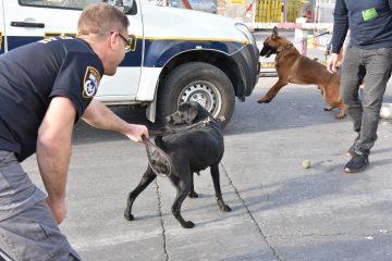הכלבים האלו התגייסו למשטרת ישראל