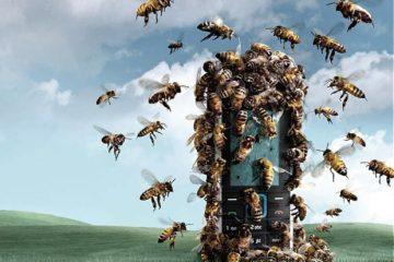 הדבורים נכחדות בגלל הניידים שלנו?