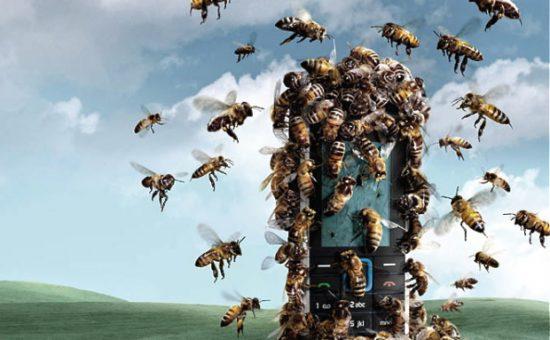 דבורים וסלולארי