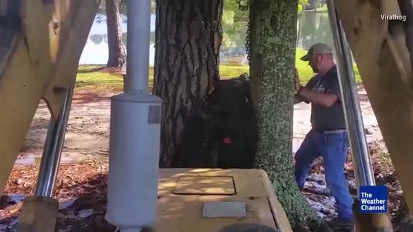 הלך העץ, ניצלה הפרה – צפו בתיעוד וידאו