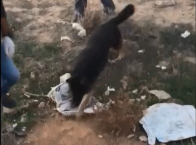 רגע מפחיד: הכלב ניצל היסח דעת וזינק על החרדי